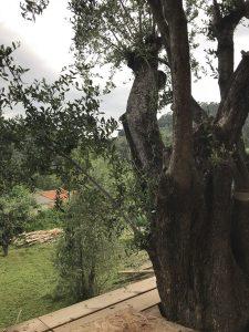 terrasse autour d'un arbre argibois